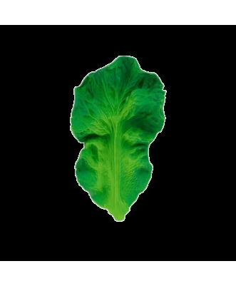 Kale Teething Toy